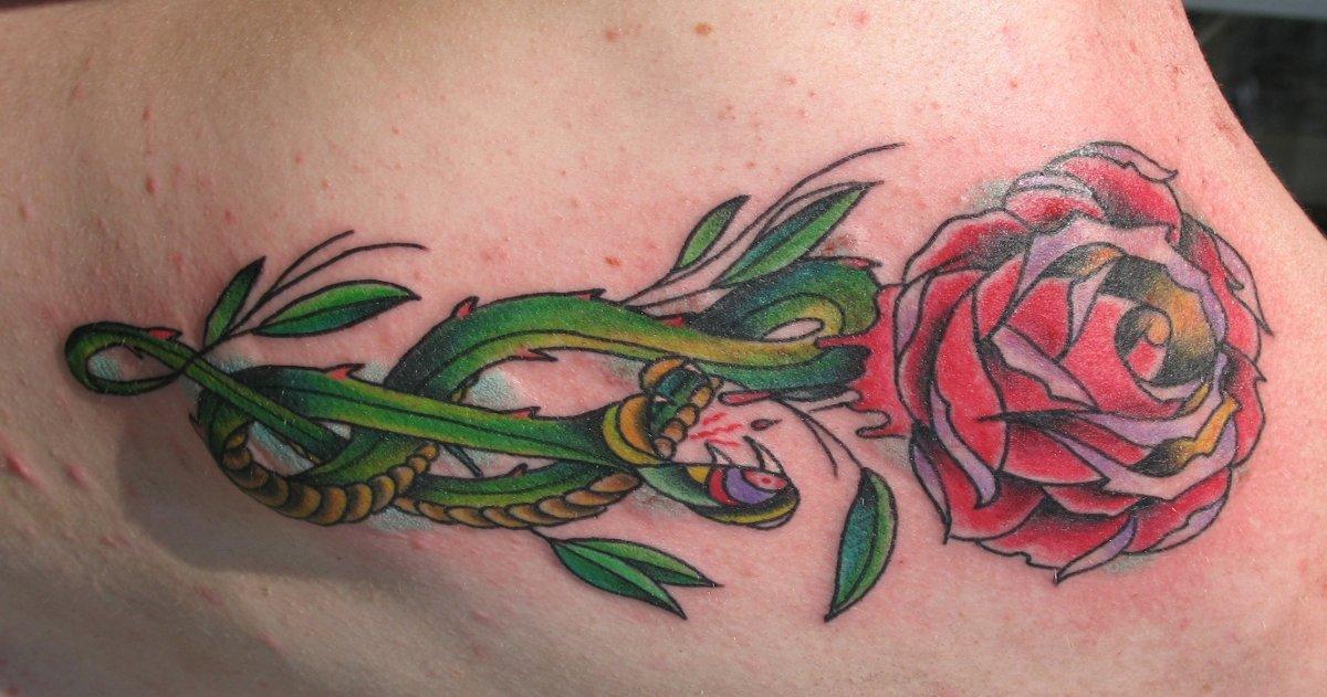 Schlangen Tattoo und die Bedeutungen alletattoo.de 2